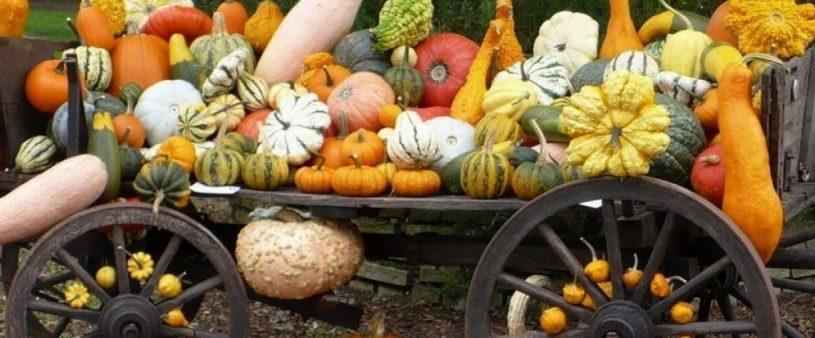 Festa della zucca di Caorera carro con zucche